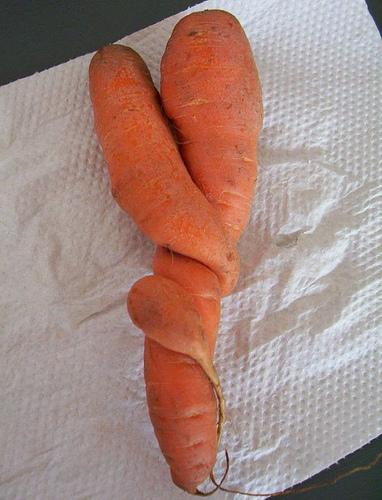 1470308306_f5d580187d carotte torsadées