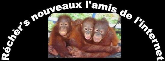 nouveaux l ami de l internet singes