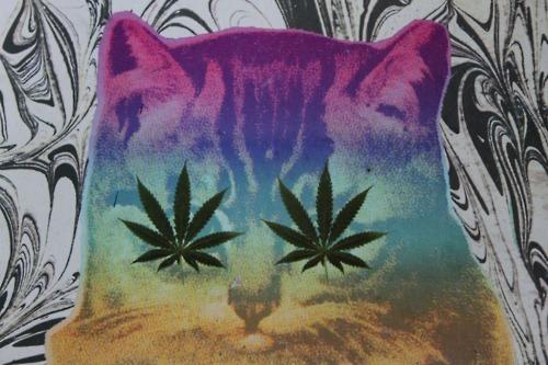 herb cat