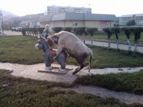Bull Humps Donkey Bull Humps Statue