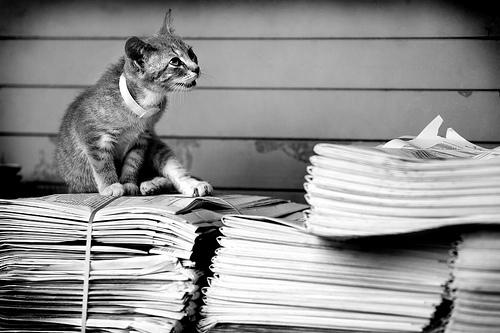 chat sur des journaux