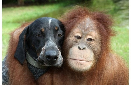 animal-best-friends--large-msg-136633439208