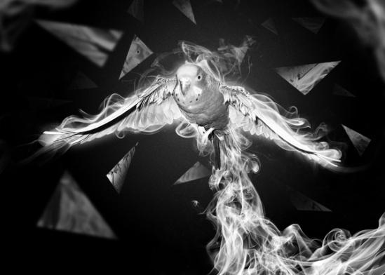 Un oiseau volatile